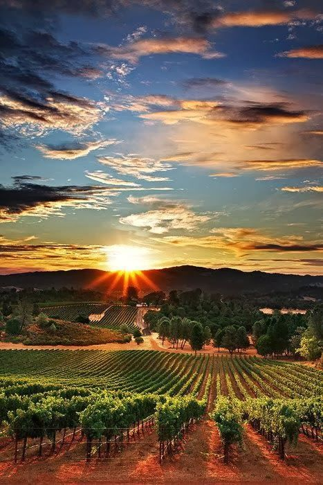 Vineyards in Napa Valley @mantripping